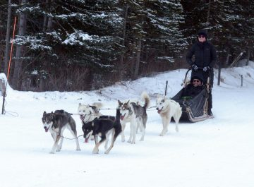 Dog Sledding in Banff Canada – me bringing in home