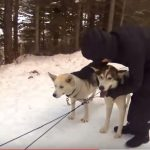 Dog Sledding in Banff Canada – some patting time