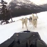 Dog Sledding in Banff Canada – our group of 6 dogs