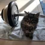 Helping dad with weights
