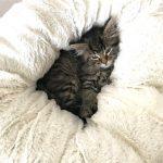 Snuggling in
