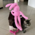 Pink furry and pink bunny